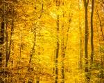 Herbstwald bei Rambach
