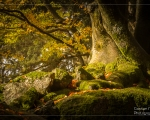 Unterwegs im Bayerischen Wald