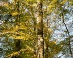 Herbstwald 2014