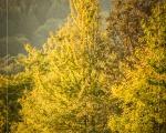 Herbst im Martinsthal im Rheingau