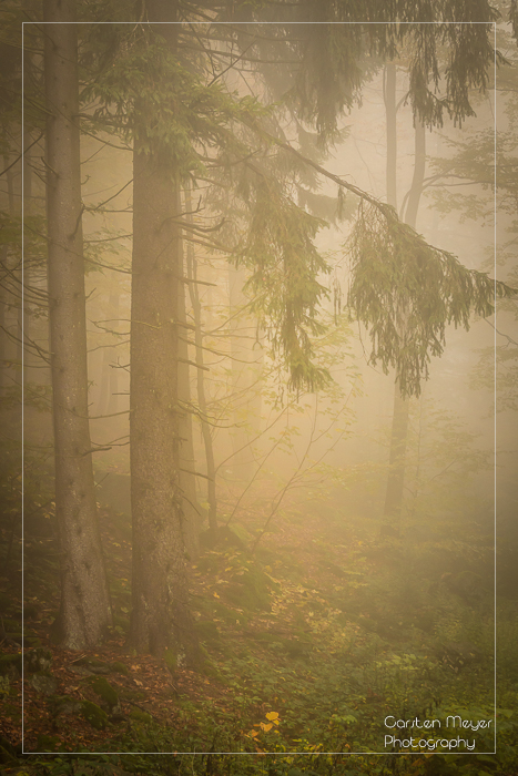 Im Nebelwald II