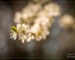 Springbreak - Der Frühling ist da