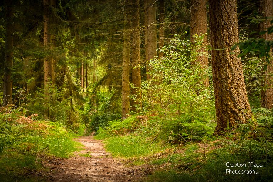 Waldsportpfad Ankum