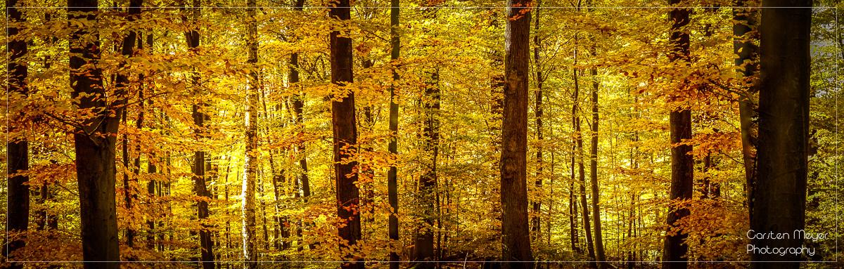 Herbstwald bei Rambach im Taunus