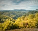 Herbst im Hohen Taunus