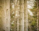 Tree Spirits (Im Shop verfügbar)