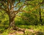 Hüter des Waldes