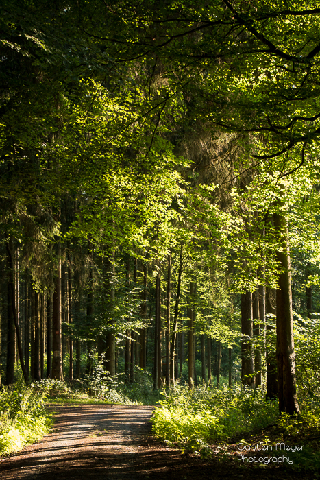 Wald 8