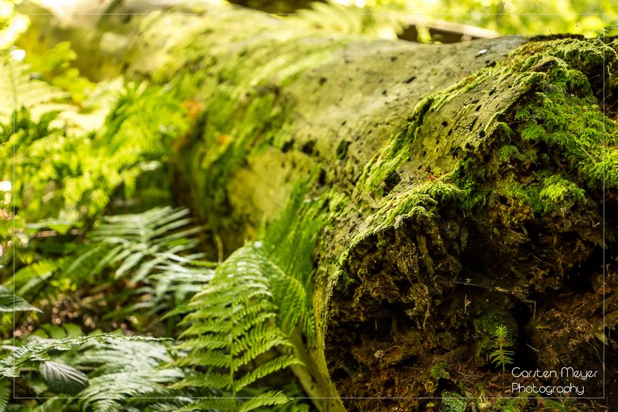 Wald 5