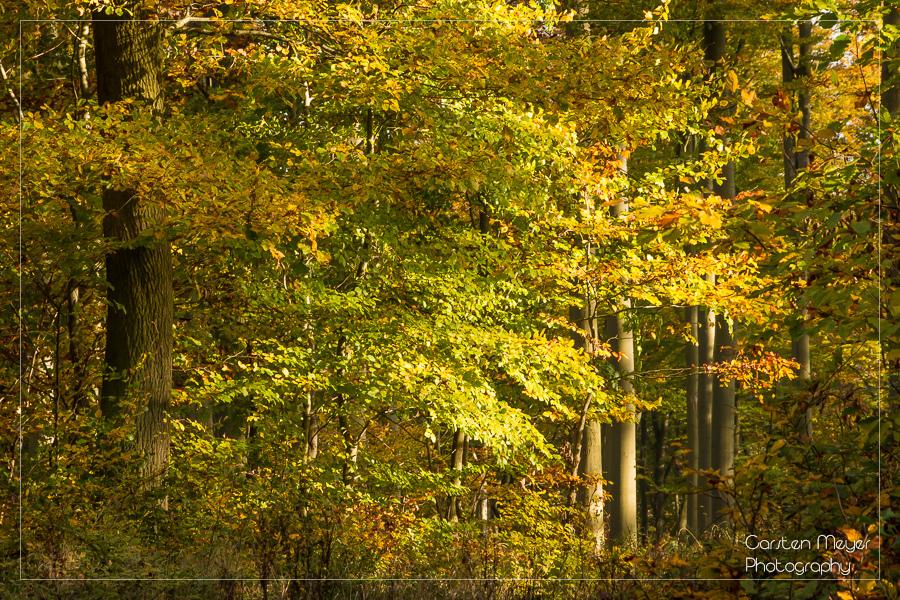 Wald 14