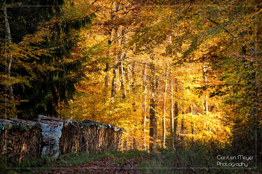 Wald 16