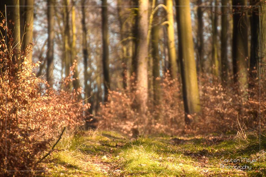 Wald 21
