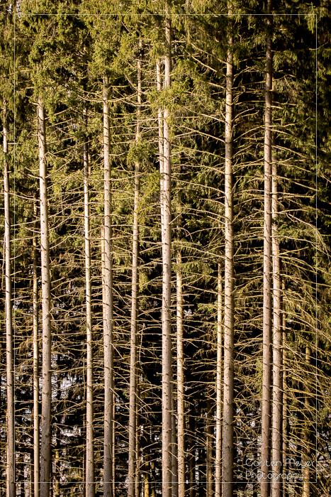 Wald 22