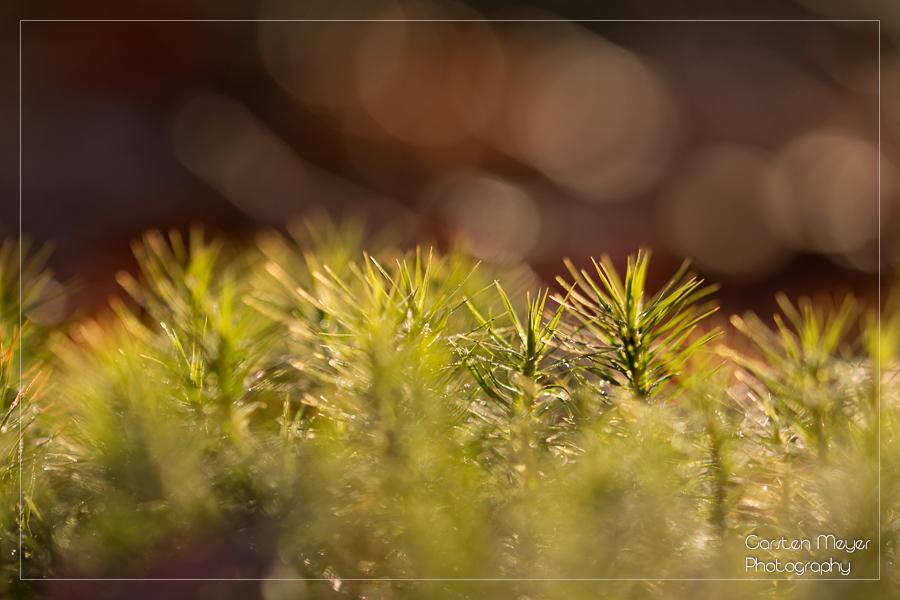 Wald 23