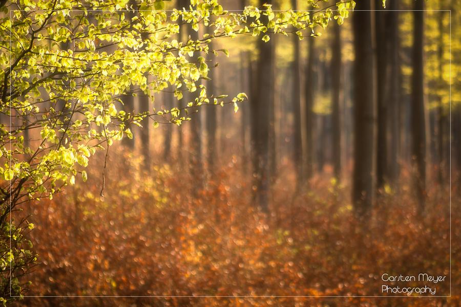 Wald 24