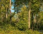 Wald 9