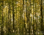 Wald 10