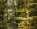 Wald 11