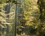Wald 12