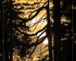 Wald 13