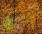 Wald 18