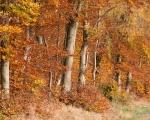 Wald 20