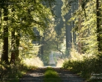 Wald 6