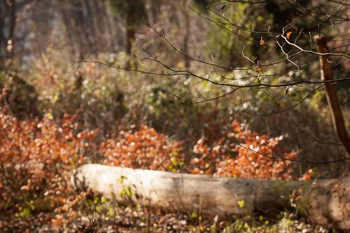 Die Reduktion auf wesentliche Elemente ist ein wichtiger Punkt in der Waldfotografie