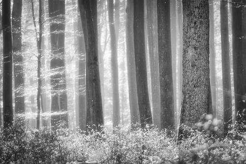 Die hohen Kontraste eignen sich gut für die Schwarz-Weiß-Fotografie