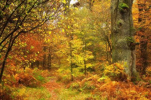 Deutschland bietet einige wunderschöne Waldregionen. Hier z.B. der Urwald Sababurg / Reinhardswald