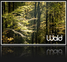 Best of - Wald