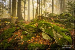 Herbststimmung im Nationalpark Bayerischen Wald