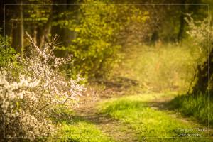 Frühlingswege
