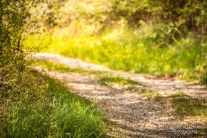 Wald-Wege