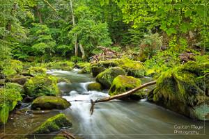 Kurz unterhalb der Irreler Wasserfälle zeigt sich die Prüm von ihrer schönsten Seite (das Bild ist auch im Shop verfügbar).