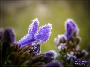 (Bild: Und es bleibt weiter kalt...)