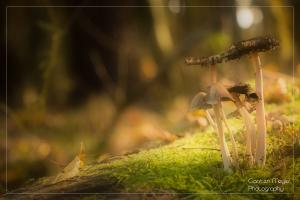 Pilze im Hebstwald