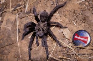 Bevor die alten Schätze Spinnweben ansetzen, sollte man sie digitalisieren