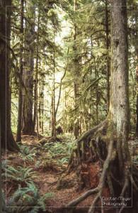 Diascan Waldszene ohne HDR-Bearbeitung