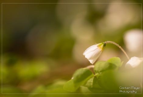 Springbreak – Der Frühling ist da!