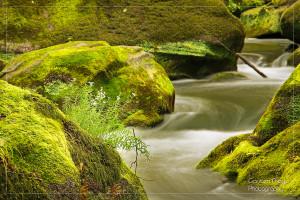 Das Wasser der Prüm schlängelt sich durch die vom Felssturz vor 20.000 Jahren stammenden Felsblöcke